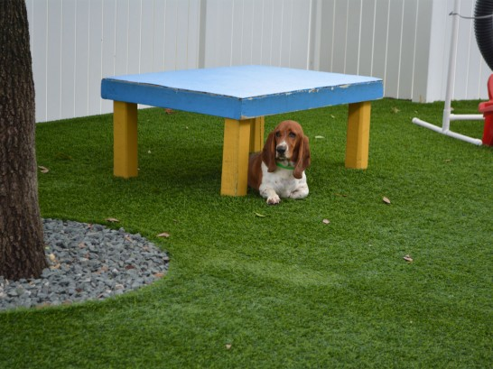 Artificial Grass Photos: Artificial Grass Carpet Titusville, Florida Dogs, Grass for Dogs