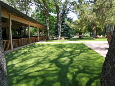 Artificial Grass Photos: Artificial Grass Waukeenah, Florida Dog Park, Backyards
