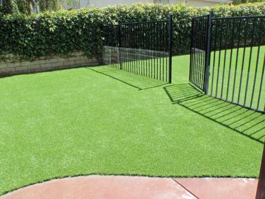 Artificial Grass Photos: Artificial Lawn Fruitland Park, Florida Artificial Turf For Dogs, Front Yard Landscaping