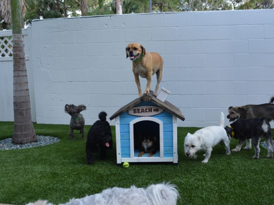 Artificial Grass Photos: Artificial Turf Installation North Brooksville, Florida Pictures Of Dogs, Dogs