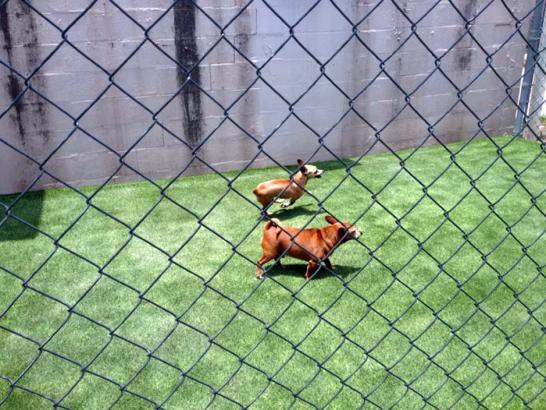 Artificial Grass Photos: Fake Turf Micanopy, Florida Pictures Of Dogs