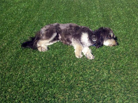 Artificial Grass Photos: Faux Grass Gainesville, Florida Dogs, Dogs Runs