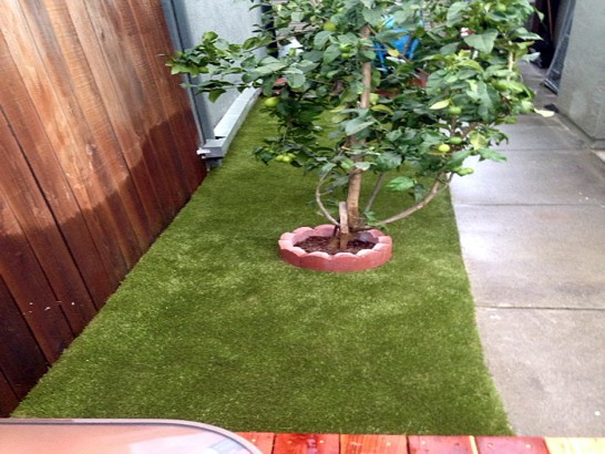 Grass Carpet Hawthorne, Florida Dog Hospital, Backyards artificial grass