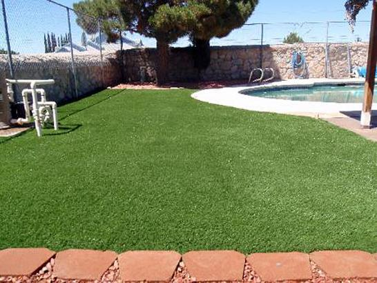 Artificial Grass Photos: Outdoor Carpet Keystone Heights, Florida Dog Parks, Natural Swimming Pools