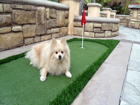 Artificial Grass Photos: Plastic Grass Astatula, Florida Gardeners,  Dog Kennels