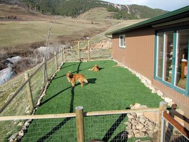 Artificial Grass Photos: Synthetic Turf Astor, Florida Dog Run,  Dog Kennels