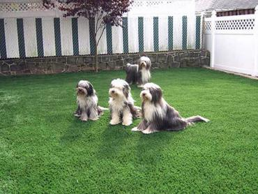 Artificial Grass Photos: Synthetic Turf Supplier Geneva, Florida Design Ideas, Backyard Garden Ideas